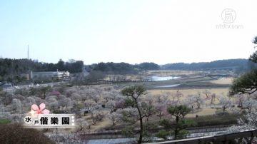 【你好日本】水户偕乐园