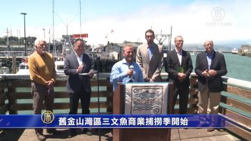 舊金山灣區三文魚商業捕撈季開始