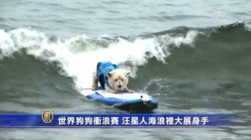 世界狗狗衝浪賽 汪星人海浪裡大展身手