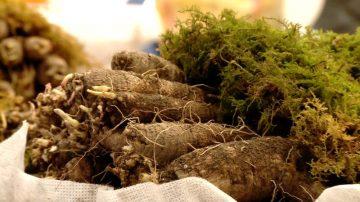 【你好韓國】醫病的草藥同樣美味 訪韓方草藥之鄉「山清」