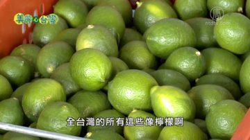 美麗心台灣:海龍蛙兵李智澤 從商場轉戰農場