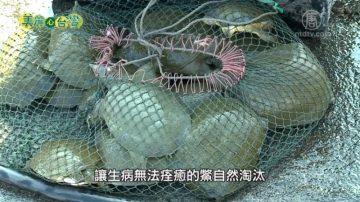 美麗心台灣:無毒養鱉 謝育諮多元經營創商機