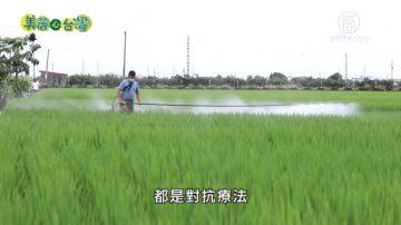 美麗心台灣:有機農業的推手 陳世雄的零污染有機農場