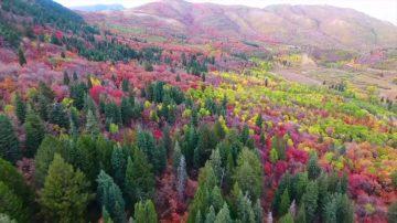 新聞放輕鬆:秋天到來葉色斑斕 法國人用落葉「滑雪」