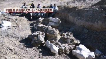 比暴龍還大!蒙古現巨型恐龍化石 推算身長約17公尺(視頻)