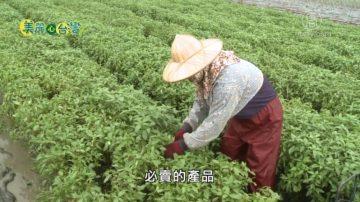 美麗心台灣:美容美髮師黃淑女的從農之路