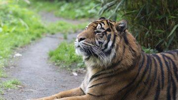民間故事:老虎吃人 原來被牠吃的人少了一樣東西