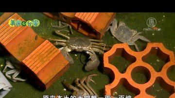 美麗心台灣:生態養殖大閘蟹 美味安全 饕客首選