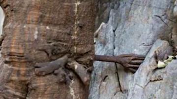 """云南千年菩提树长出""""手"""" 五指分明紧攀岩缝"""