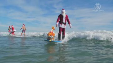慶祝聖誕方式多 佛州衝浪德國冬泳