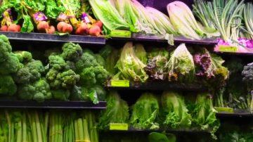 生菜攜大腸桿菌 源自加州中部農場