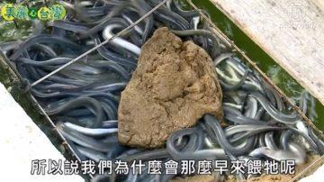 美丽心台湾:偏爱鳗鱼养殖 李建宏挑战高风险