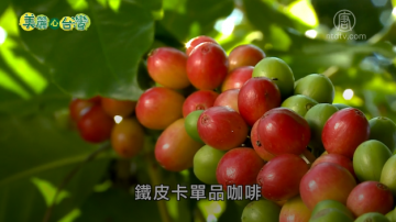美丽心台湾:小农咖啡栽种到烘焙 用心喝得到
