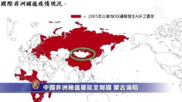 中國非洲豬瘟蔓延至鄰國!蒙古淪陷