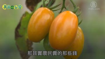 美麗心台灣:阿甘的有機農業夢