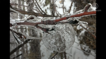 新聞放輕鬆:極寒天氣致尾部結冰 美國國鳥白頭鷹獲救