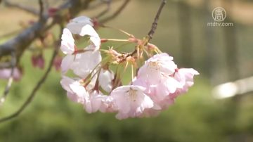 春季養肝好時節 疏肝理氣重調養