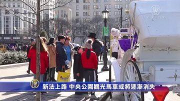 新法上路 中央公園觀光馬車或將逐漸消失