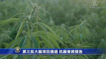 第三批大麻項目通過 抗麻者將提告