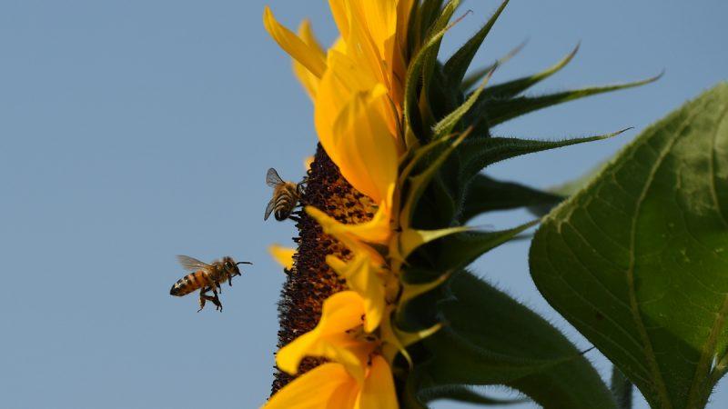 台灣女孩眼中飛入4隻蜜蜂 取出仍活着